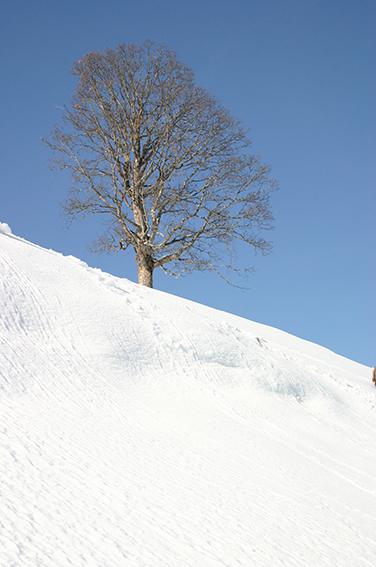 Winterimpression Jochberg, Österreich